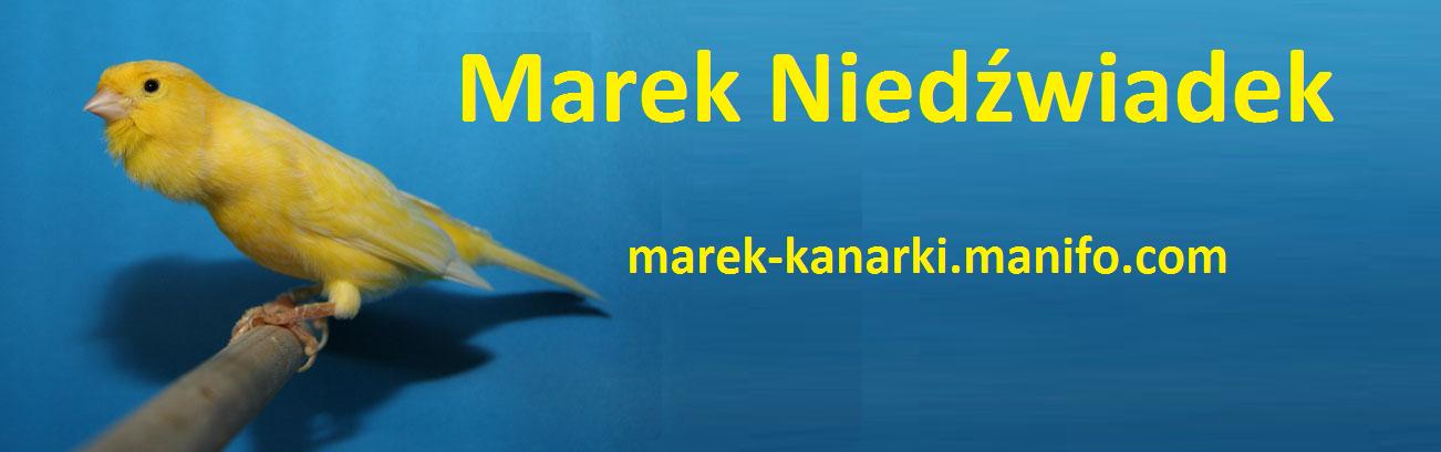 Kanarki Harce�skie