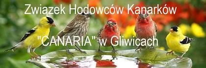 canaria-gliwice