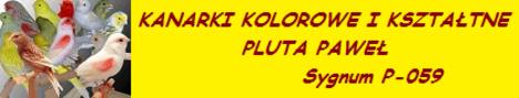 pawel-kanarki