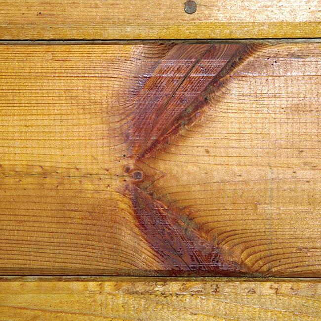 sęk skrzydlaty w drewnie sosonwym